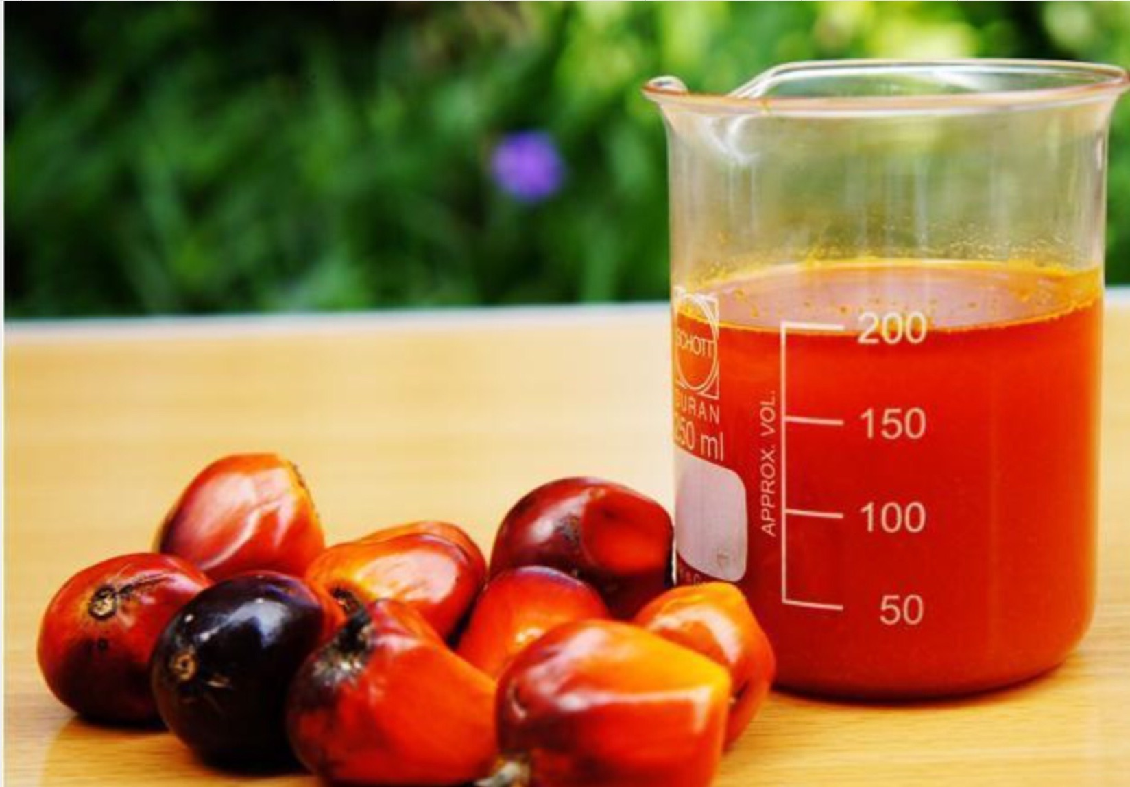 Palm oil and Palm fruits